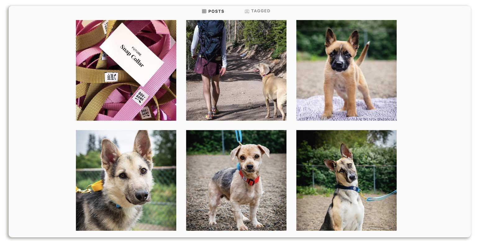 Niche Dog Instagram